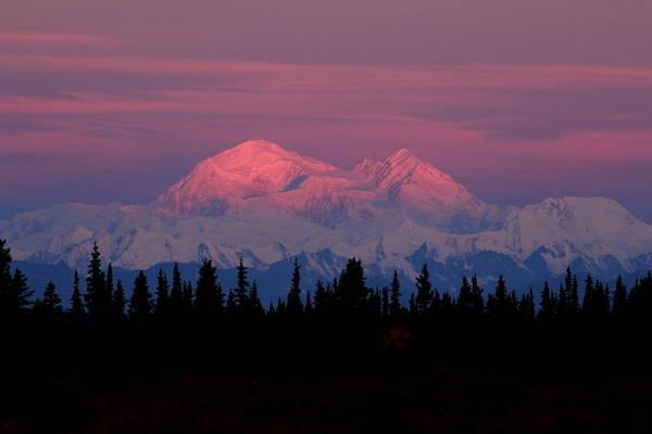 Photograph - Morning Light On Denali by Steve Wolfe