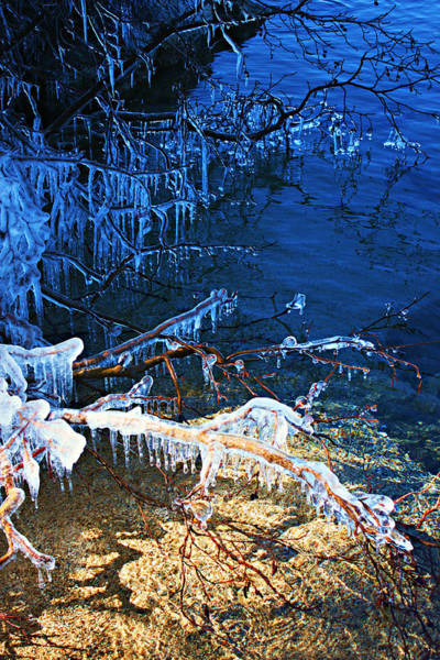 Photograph - Morning Light On Icicles by Sean Sarsfield