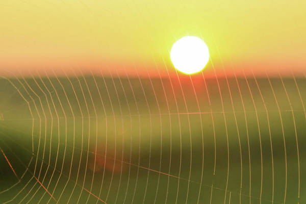 Photograph - Morning Light On Spiderweb by Dan Sproul