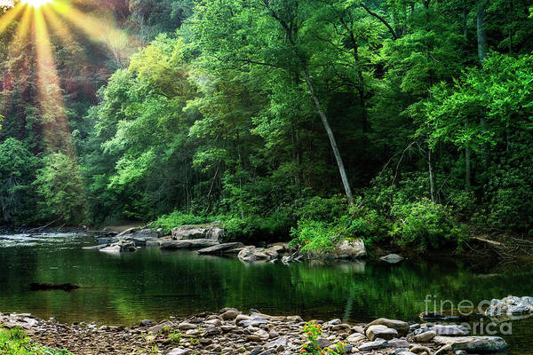 Photograph - Morning Light On Williams River  by Thomas R Fletcher