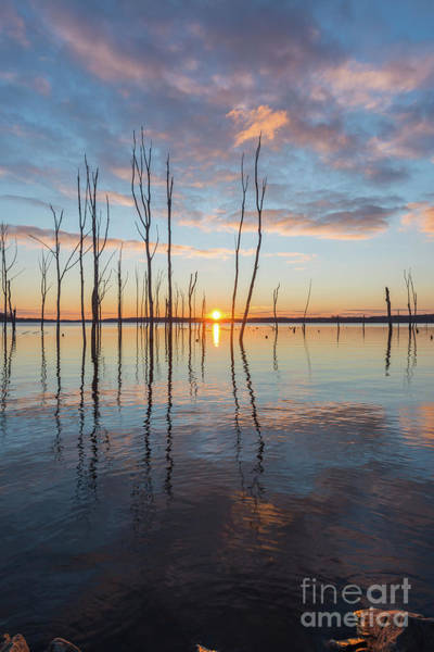 Wall Art - Photograph - Morning Light Over A Lake  by Michael Ver Sprill