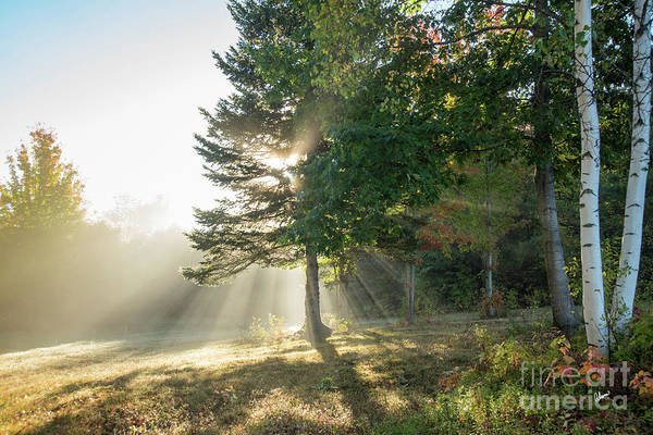 Photograph - Morning Light Rays by Alana Ranney