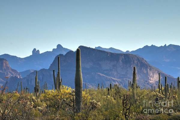 Wall Art - Photograph - Arizona Desert Morning Magesty by Ann Loyd