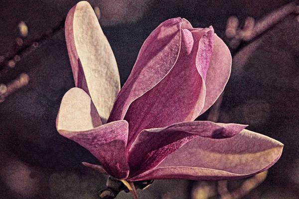 Photograph - Morning Magnolia Brocade by Theo O'Connor