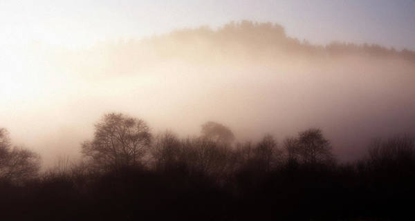 Photograph - Morning Mist  by Cliff Norton