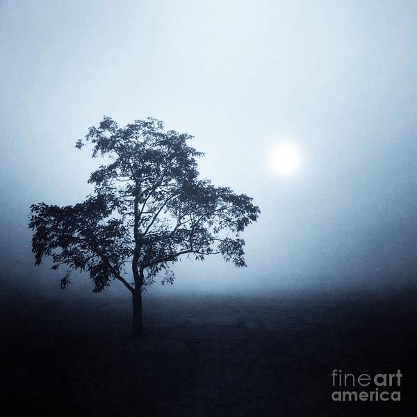 Wall Art - Photograph - Morning Mist by John Edwards