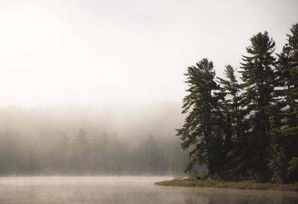 Algonquin Photograph - Morning Mist On Mew Lake by Cale Best