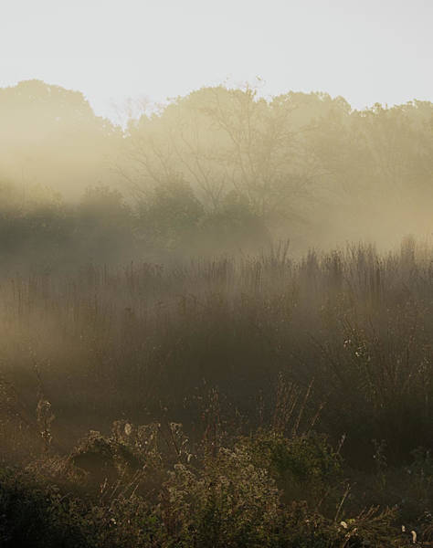 Photograph - Morning Mist On The Trail by Paul Ross