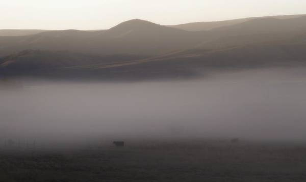 Photograph - Morning Mist Over Cows by Dan Sproul