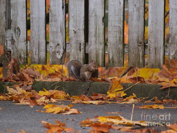 Photograph - Morning Nuts by Vivian Martin