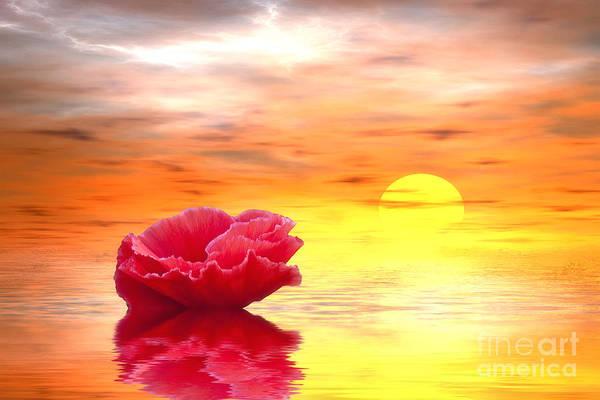 California Poppy Photograph - Morning Of Your Dreams by Veikko Suikkanen