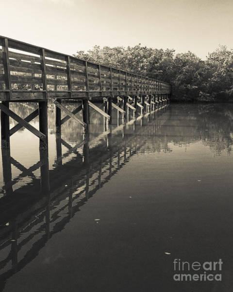 Photograph - Morning On The Bayou by Edward Fielding