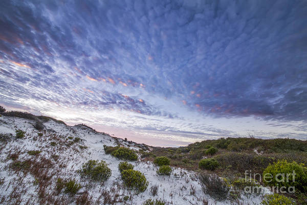 Port St. Joe Photograph - Morning On The Dunes In Cape San Blas by Twenty Two North Photography