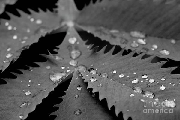 Photograph - Morning Rain by John F Tsumas