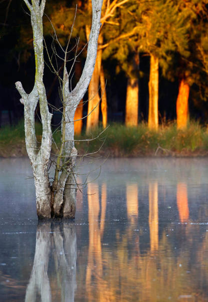 Photograph - Morning Reflections by Nicholas Blackwell
