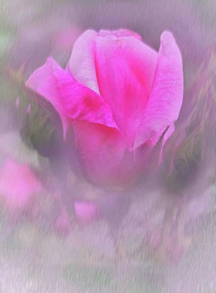 Wall Art - Photograph - Morning Rose. by Heinz G Mielke