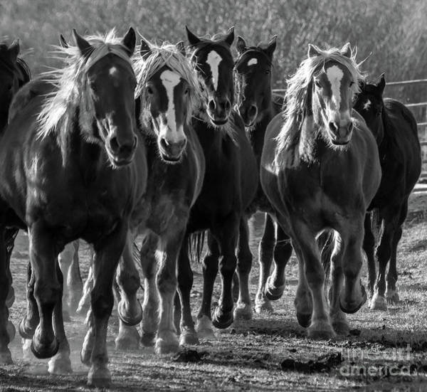 Westcliffe Photograph - Morning Rush Hour In Westcliffe by Donald Savage