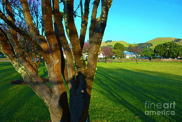 Photograph - Morning Shadows In Waimea by Bette Phelan