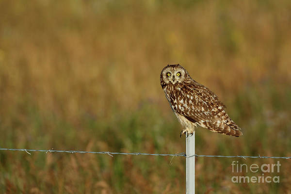 Photograph - Morning Shorty by Beve Brown-Clark Photography