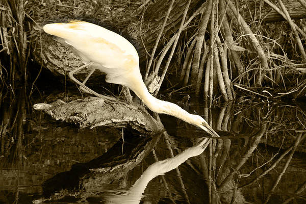 Photograph - Morning Sip II by Jody Lovejoy