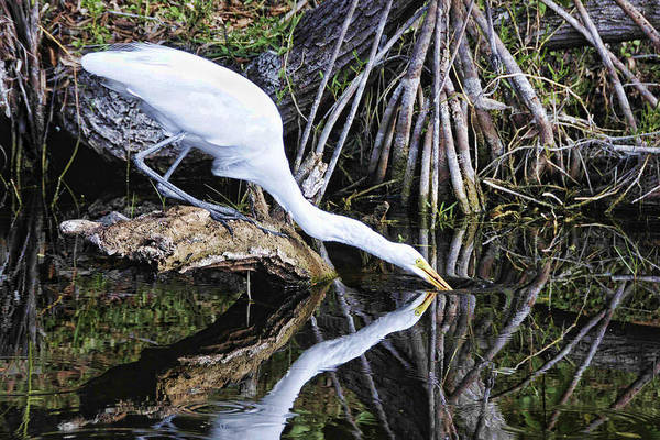 Photograph - Morning Sip by Jody Lovejoy
