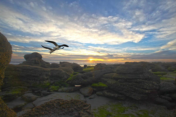 Photograph - Morning Song by Robert Och