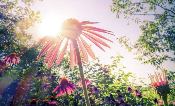 Photograph - Morning Sun On Wildflowers by Dan Sproul