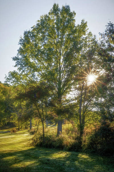 Wall Art - Photograph - Morning Sun by Tom Mc Nemar