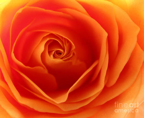 Rose Bud Photograph - Morning Sunrise by Krissy Katsimbras