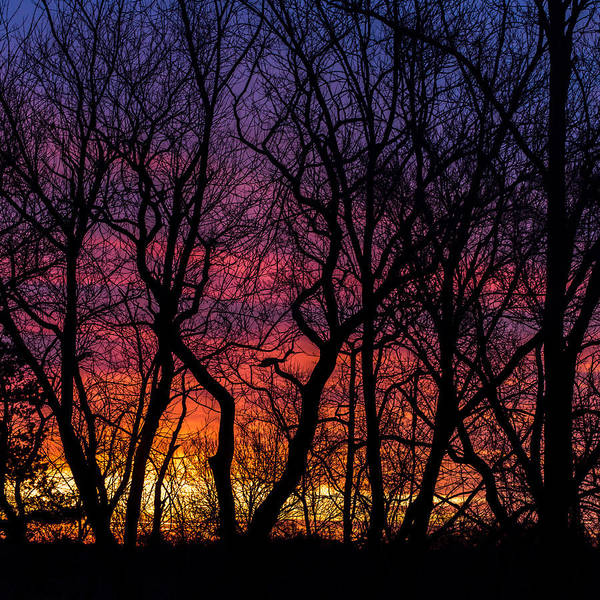 Photograph - Morning Sunrise Trees Square by Terry DeLuco