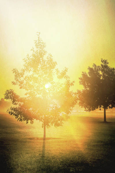 Photograph - Morning Sunshine by Dan Sproul