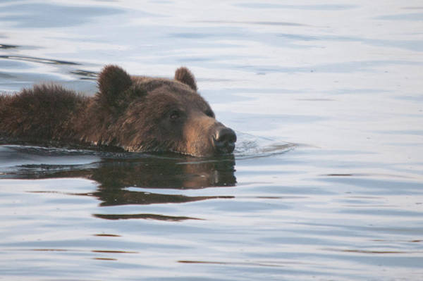 Photograph - Morning Swim by Steve Stuller