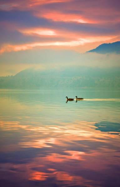 Photograph - Morning Swim by Tara Turner