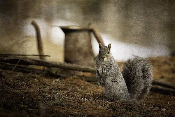 Grey Squirrel Photograph - Morning Tea by Everet Regal