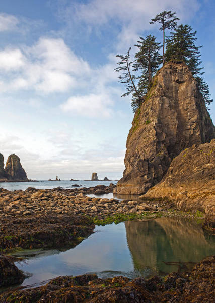 Oregon Coast Photograph - Morning Tidepool by Mike Reid