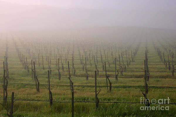Photograph - Morning Vineyard by Balanced Art