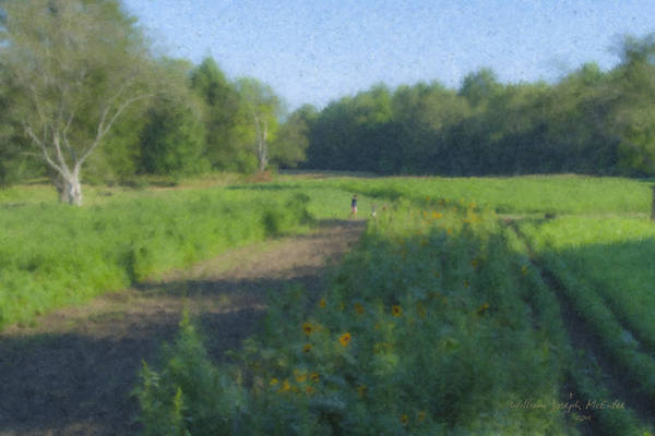 Morning Walk At Langwater Farm Art Print