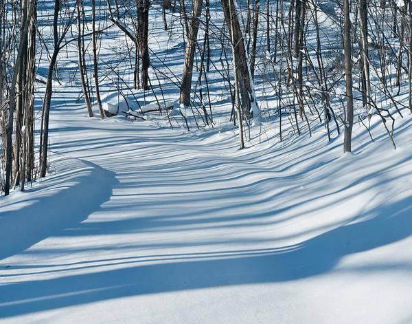 Photograph - Morning Winter Light by Lara Ellis