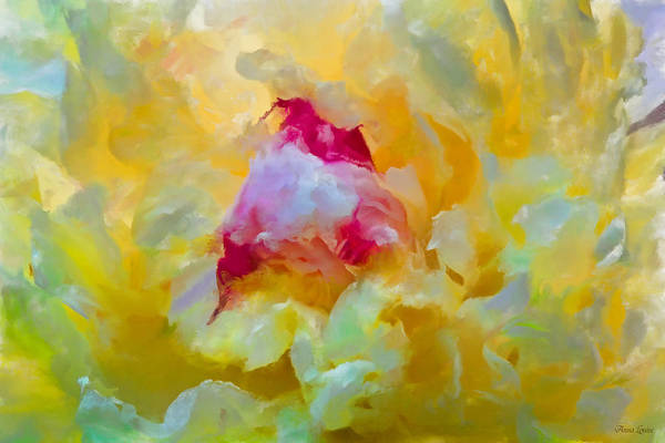 Photograph - Morning Yellow Peony by Anna Louise