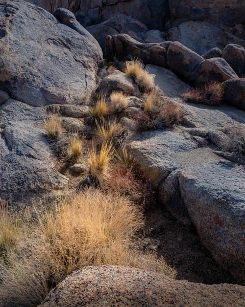 Wall Art - Photograph - Morning's Golden Grass by Joseph Smith