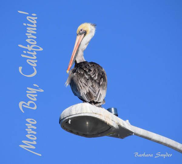 Morro Bay Painting - Morro Bay California Pelican by Barbara Snyder