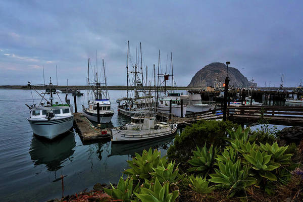 Photograph - Morro Bay by Dillon Kalkhurst
