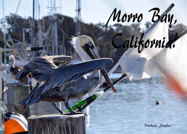 Morro Bay Painting - Morro Bay Harbor Pelican Ready For Take Off by Barbara Snyder