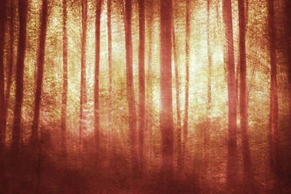 Wall Art - Photograph - Mortwood Forest In Red by Violet Gray