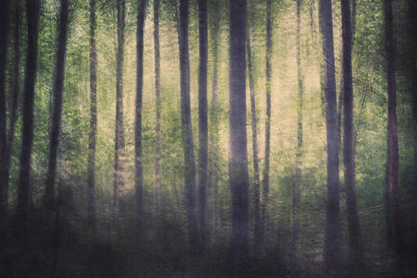 Wall Art - Photograph - Mortwood Forest by Violet Gray
