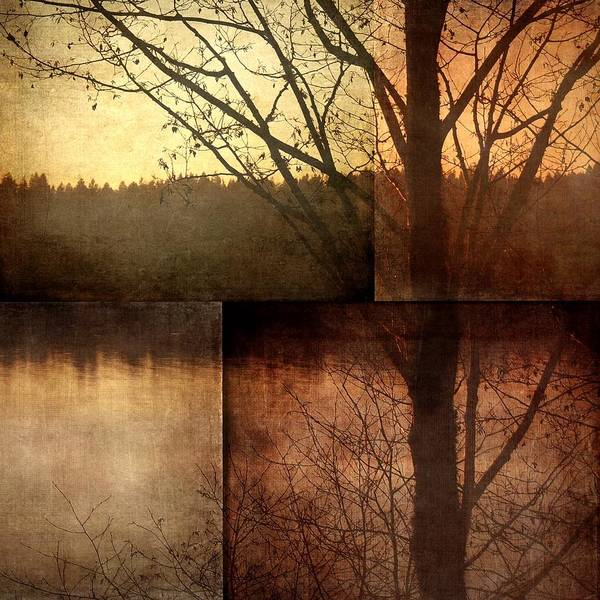 Photograph - Mosaic - Tree And Texture by Patricia Strand