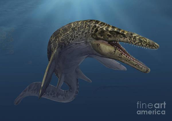 Lizards Digital Art - Mosasaurus Hoffmanni Swimming by Sergey Krasovskiy