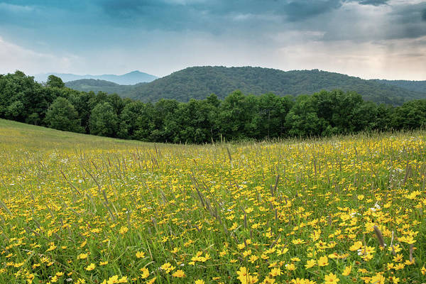 Photograph - Moses Cone Meadow by Jim Neal