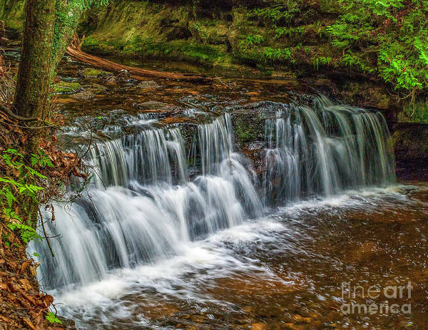 Photograph - Mosquito Falls by Nick Zelinsky