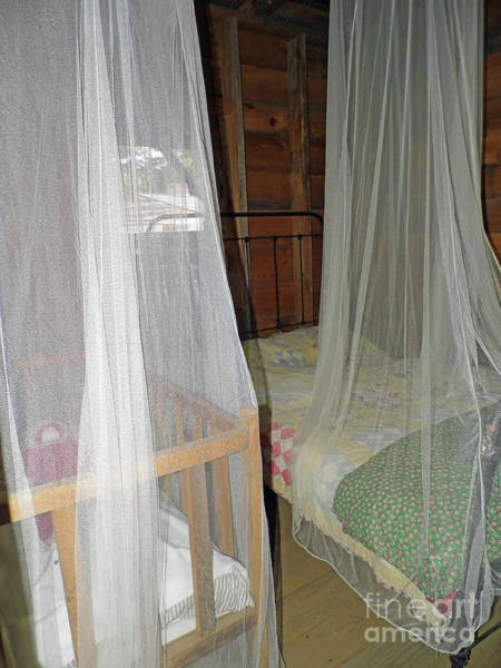 Photograph - Mosquito Protection by D Hackett